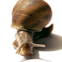 №16964 Snail-active, 5 мл