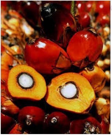 №14754 Пальмовое водорастворимое масло