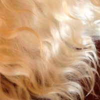 №16780 Волосы, купим натуральные неокрашенные волосы.