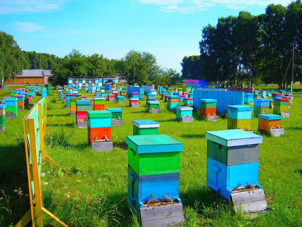 №16830 Предприятие покупает мед, прополис, воск в Николаевской области.