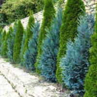 №17604 Посадка кустов,крупномерных растений,живой изгороди
