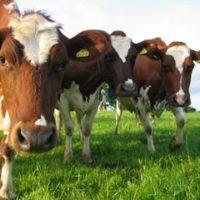 №18112 Кормовые ингредиенты для с/х животных и птиц